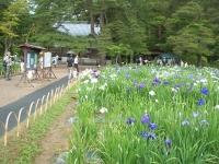 2014-06-28毛越寺あやめ祭り060