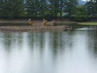 2014-06-28毛越寺あやめ祭り066