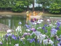 2014-06-28毛越寺あやめ祭り077