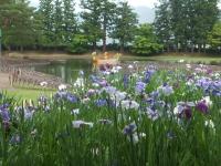 2014-06-28毛越寺あやめ祭り076