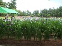 2014-06-28毛越寺あやめ祭り075