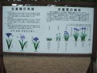 2014-06-28毛越寺あやめ祭り073