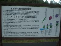 2014-06-28毛越寺あやめ祭り072