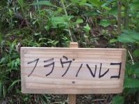 みちのく紫陽花園2014-07-05-059