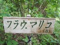みちのく紫陽花園2014-07-05-065