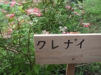 みちのく紫陽花園2014-07-05-073