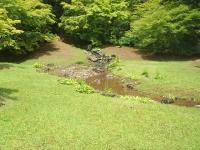 2014-06-28毛越寺あやめ祭り089
