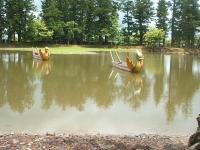 2014-06-28毛越寺あやめ祭り085