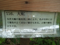 みちのく紫陽花園2014-07-05-079
