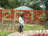 2014-06-21花巻温泉街バラ園213