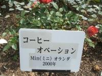 2014-06-21花巻温泉街バラ園220