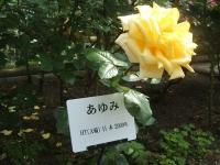 2014-06-21花巻温泉街バラ園215