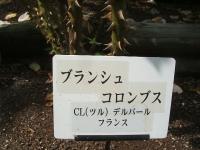 2014-06-21花巻温泉街バラ園225