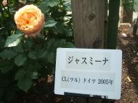 2014-06-21花巻温泉街バラ園224