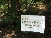 2014-06-21花巻温泉街バラ園221