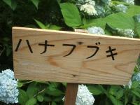 みちのく紫陽花園2014-07-05-094