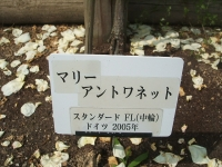 2014-06-21花巻温泉街バラ園229