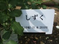 2014-06-21花巻温泉街バラ園228