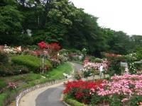 2014-06-21花巻温泉街バラ園237
