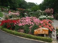 2014-06-21花巻温泉街バラ園235