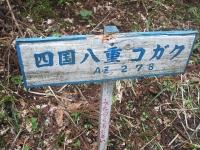 みちのく紫陽花園2014-07-05-117