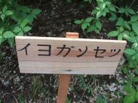みちのく紫陽花園2014-07-05-119