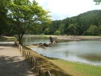 2014-06-28毛越寺あやめ祭り115
