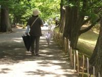 2014-06-28毛越寺あやめ祭り112