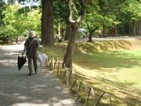 2014-06-28毛越寺あやめ祭り113