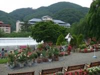 2014-06-21花巻温泉街バラ園253