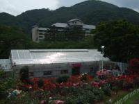 2014-06-21花巻温泉街バラ園251