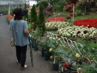 2014-06-21花巻温泉街バラ園261