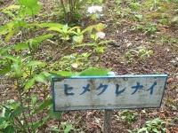 みちのく紫陽花園2014-07-05-143