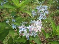 みちのく紫陽花園2014-07-05-152