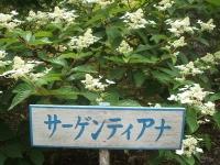 みちのく紫陽花園2014-07-05-157