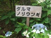 みちのく紫陽花園2014-07-05-160
