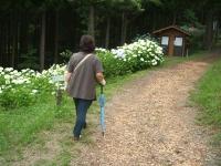 みちのく紫陽花園2014-07-05-172