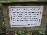 みちのく紫陽花園2014-07-05-185
