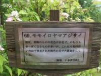 みちのく紫陽花園2014-07-05-183