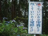 みちのく紫陽花園2014-07-05-189