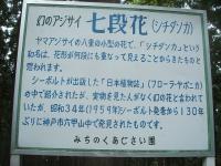 みちのく紫陽花園2014-07-05-187