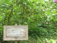 みちのく紫陽花園2014-07-05-195