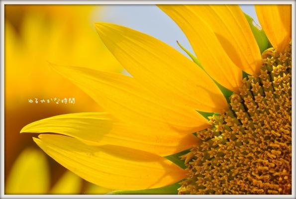 BNVDf0W3vuY9usf1407720666_1407720712.jpg