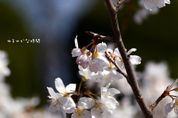 PXUJgSy_VmpURBQ1393985595_1393985669.jpg