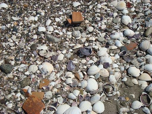 海岸にて土師器散布