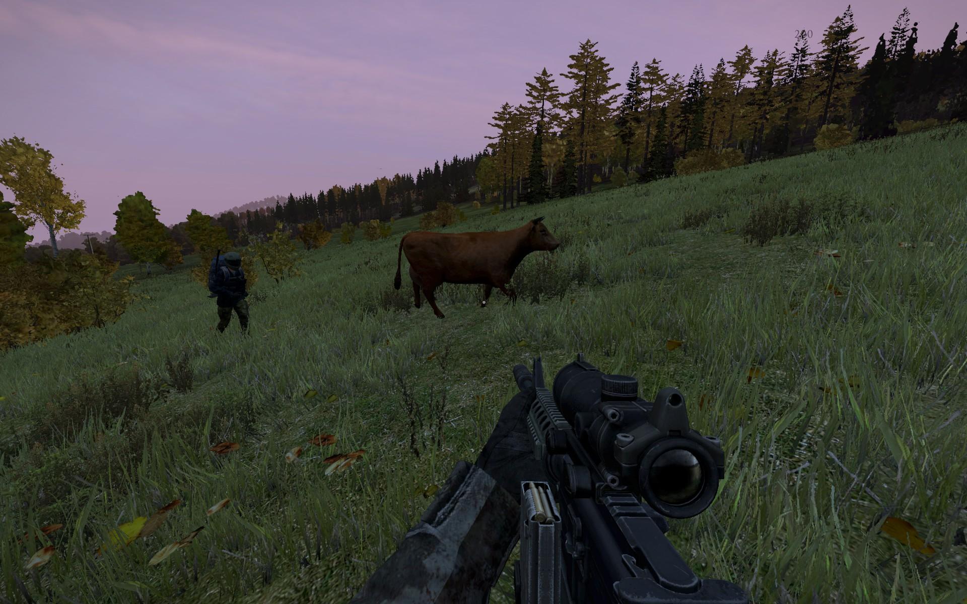 牛追いするわし