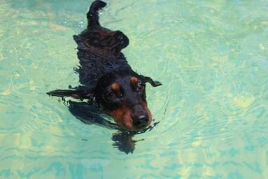 梅くん泳ぐ