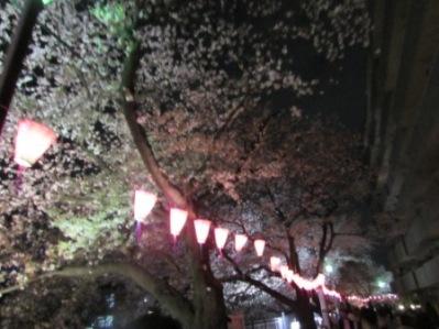 2014 大岡川桜まつり 002.jpg
