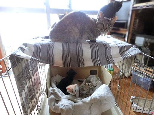 お部屋の上に乗っかってるのはダヤン、その後方に隠れているのはバジル・なづな