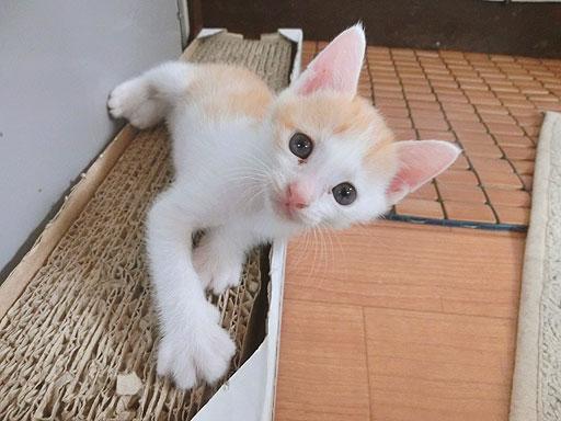 尻尾のとんがり具合が可愛らしぃ~の~~